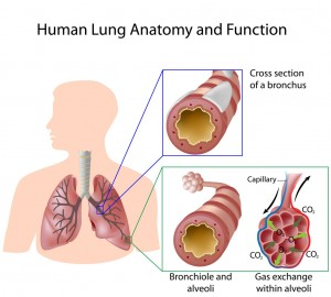 Normal air flow to the lungs