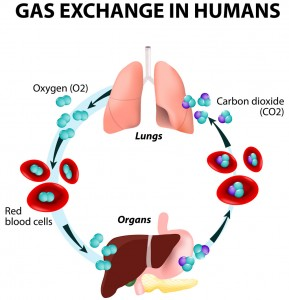 oxygen is carried through blood
